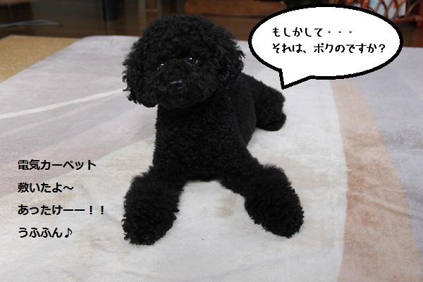 07_20121217002157.jpg