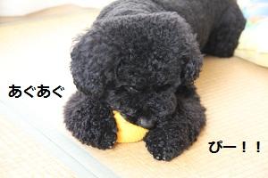 09_20121009231209.jpg