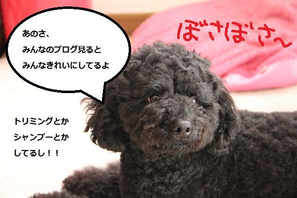 100_20121230235705.jpg