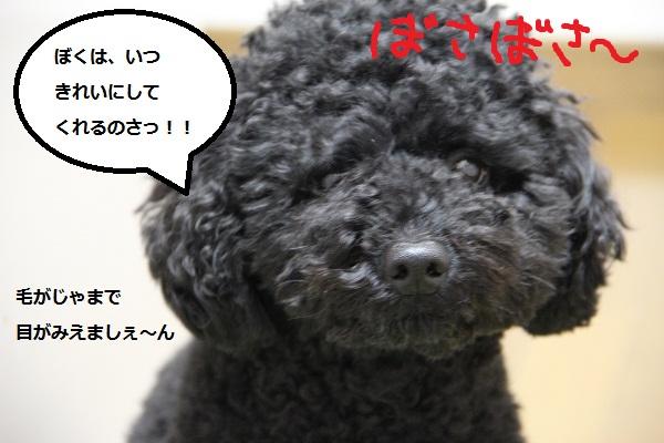 101_20121230235705.jpg