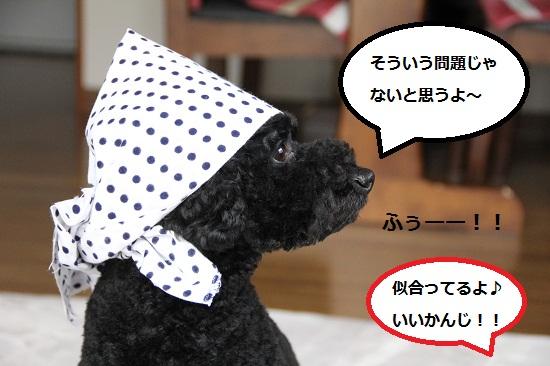 105_20121231182300.jpg