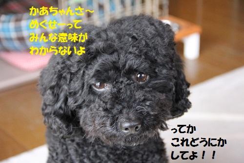 10_20130317234927.jpg