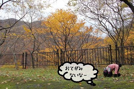 110_20121119220852.jpg
