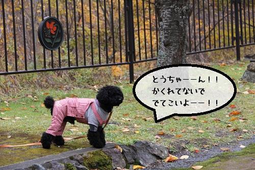 114_20121119221128.jpg