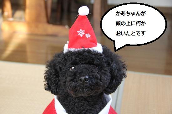 11_20121218220533.jpg