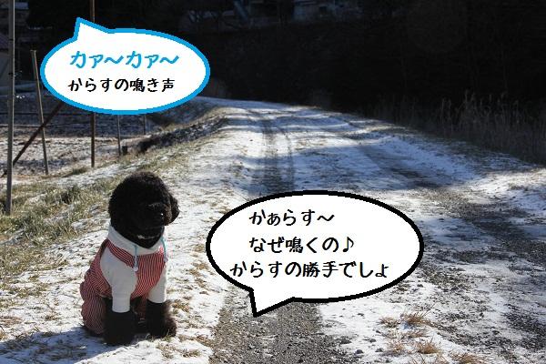 126_20130108232831.jpg