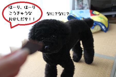12_20121127150130.jpg