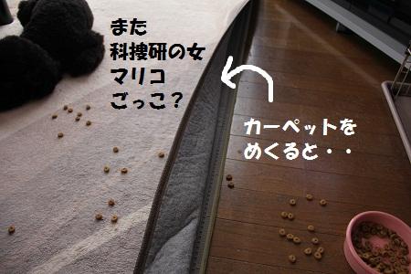 14_20130228104957.jpg