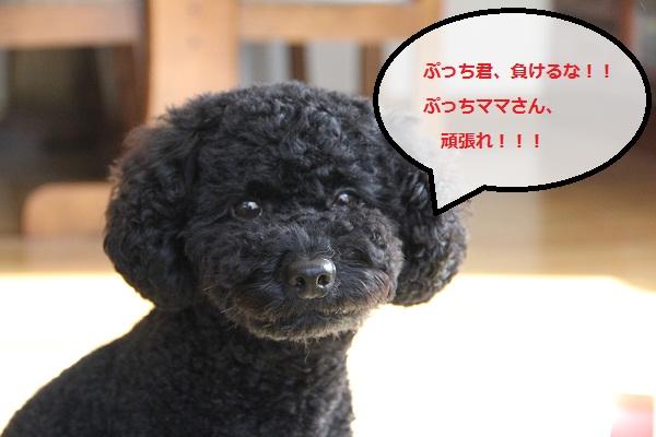 15_20121009231419.jpg