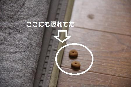 15_20130228104957.jpg