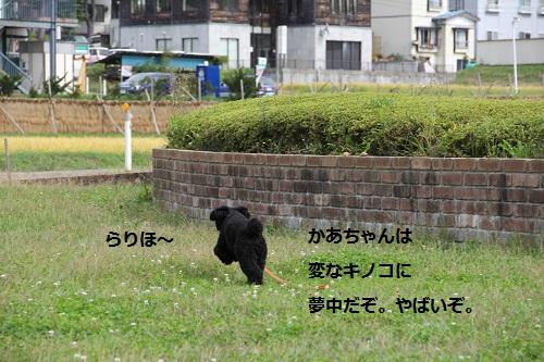 21_20121010232228.jpg