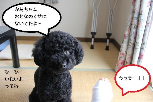 22_20121127233449.jpg