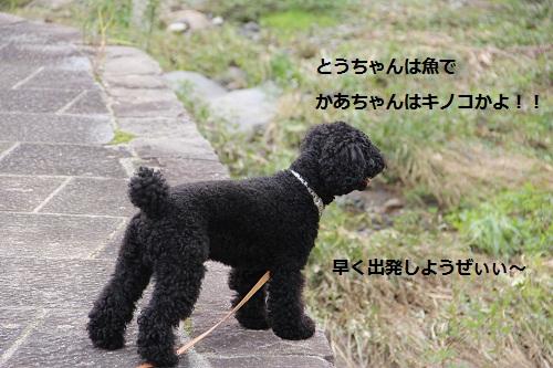 23_20121010232306.jpg