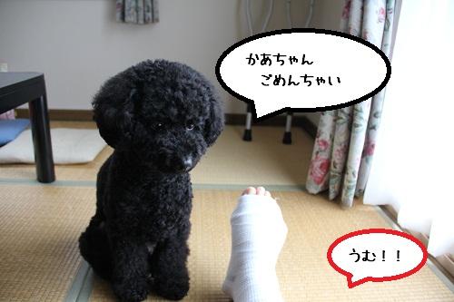 23_20121127233449.jpg
