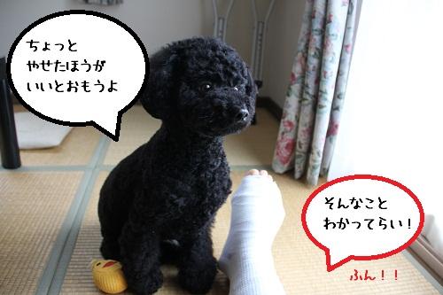 24_20121127233449.jpg