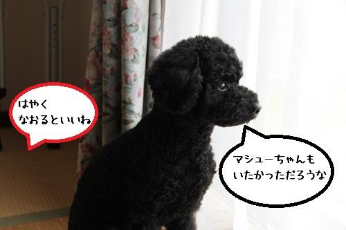 25_20121127233449.jpg