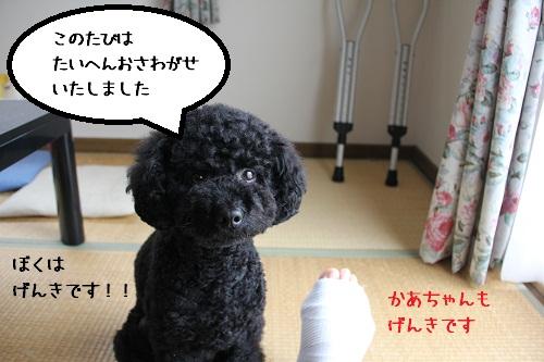 26_20121202224617.jpg