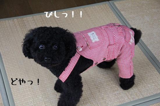 29_20121031003719.jpg