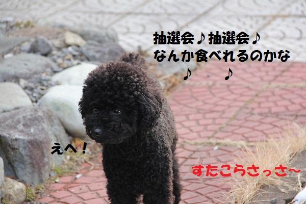 2_20130219142616.jpg