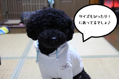 41_20121209005105.jpg