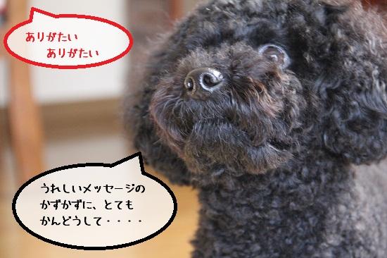 42_20121108005012.jpg