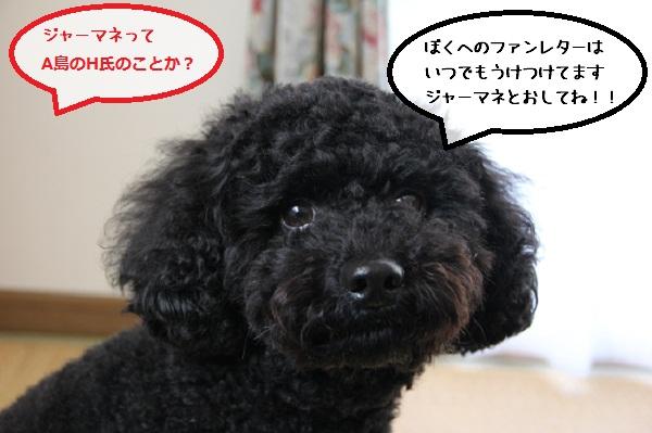 44_20121108005012.jpg