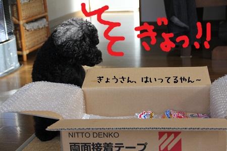 47_20121111222033.jpg