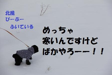 4_20130209151539.jpg