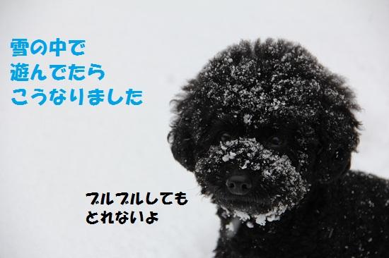 4_20130226001334.jpg
