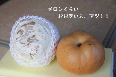 51_20121211004433.jpg