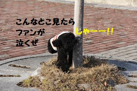 53_20130122201302.jpg