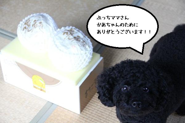 55_20121211004526.jpg