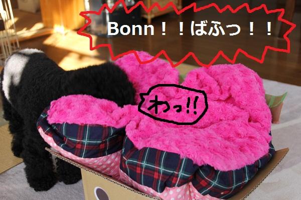 55_20121224231336.jpg