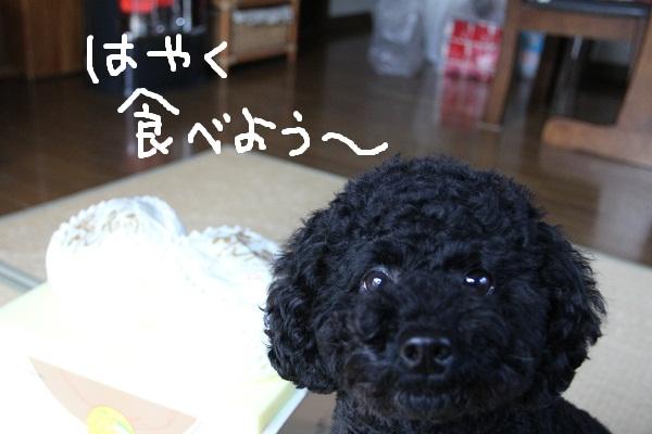 56_20121211004526.jpg