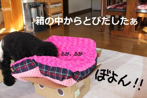56_20121224231336.jpg