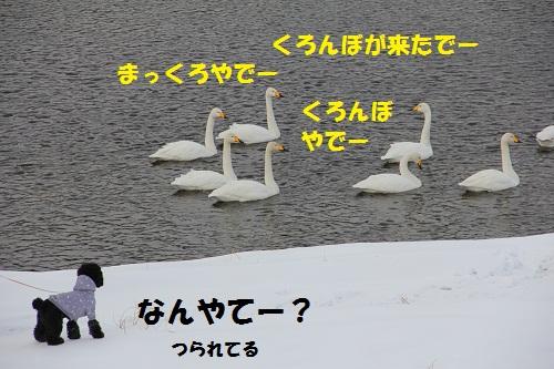 5_20130209151539.jpg
