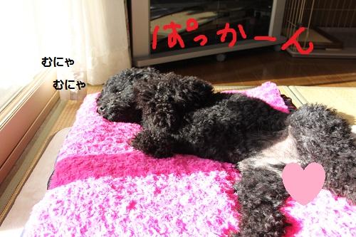 69_20121226000124.jpg