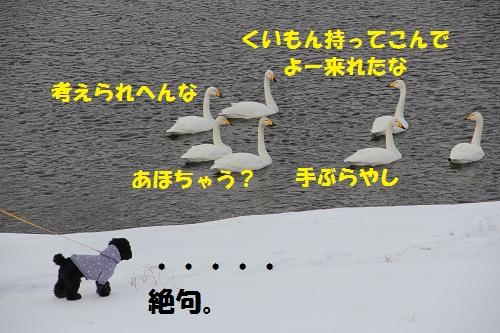 6_20130209151606.jpg
