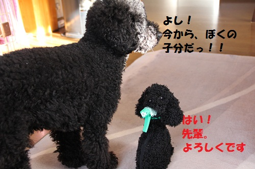 7_20130208133736.jpg