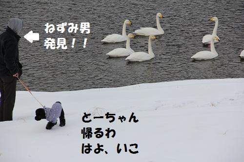 7_20130209151606.jpg