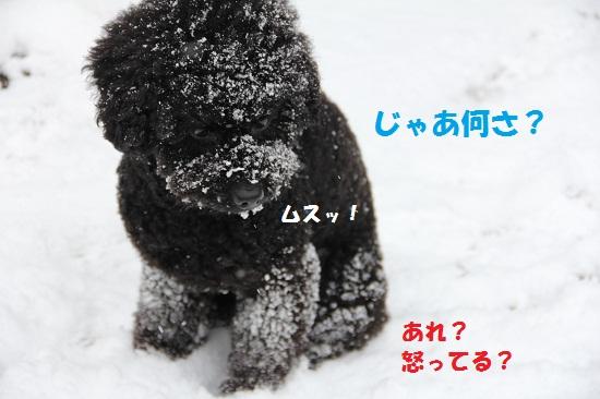 7_20130226001359.jpg