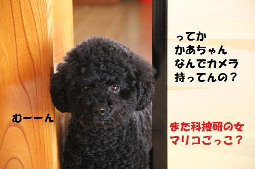84_20130204141427.jpg