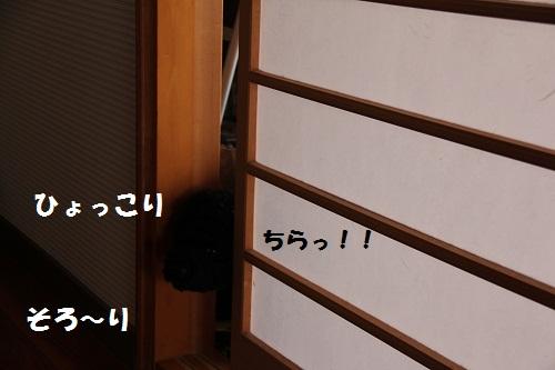 87_20130204141456.jpg