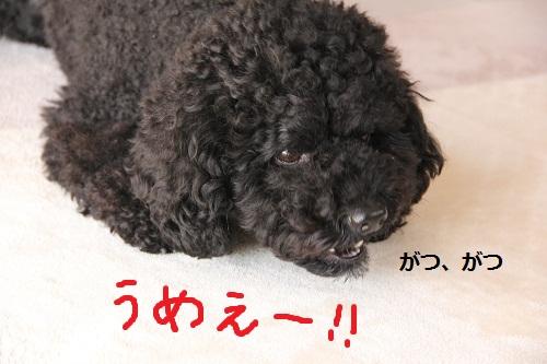 88_20121226235132.jpg