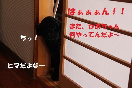 88_20130204141456.jpg