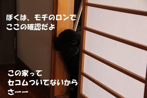 89_20130204141456.jpg