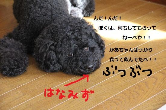 92_20121229173302.jpg