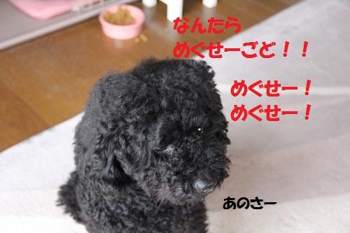 9_20130317234928.jpg