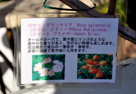 DSC_1400-20131118.jpg