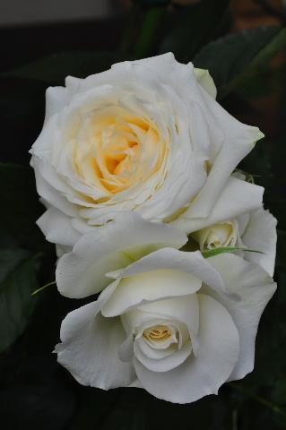 20120526 (94)